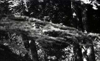 (c) Levana Schutz, photographe